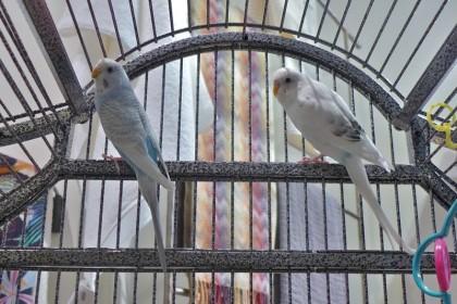 Stella birds 121712