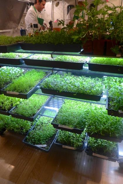 Bouley Botanical plants