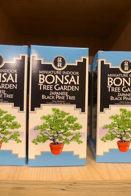 Urban Outfitters bonsai garden