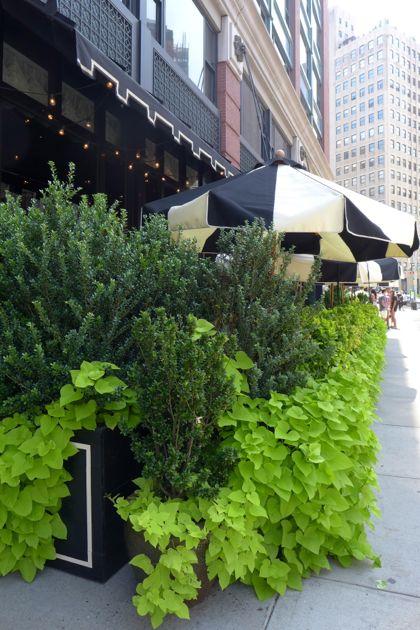 Tribeca Grand plants