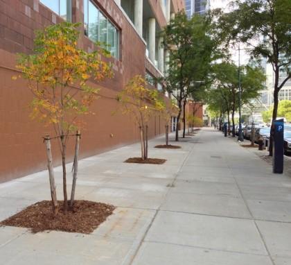 West Street trees