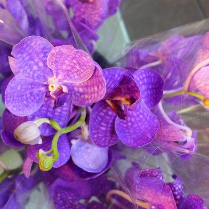 Dutch Petals orchids