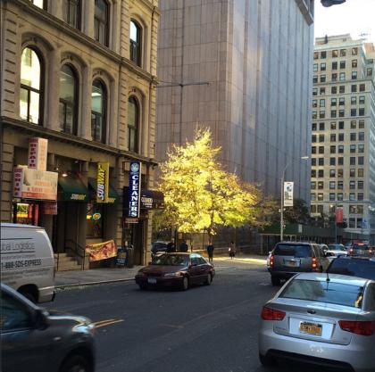Worth Street tree instagram by Tribeca Citizen