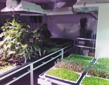 Atera basement grow room by MargueritePreston
