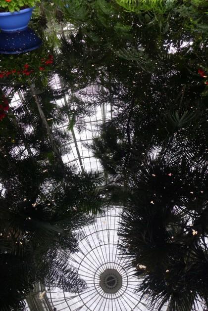 New York Botanical Garden conservatory water feature