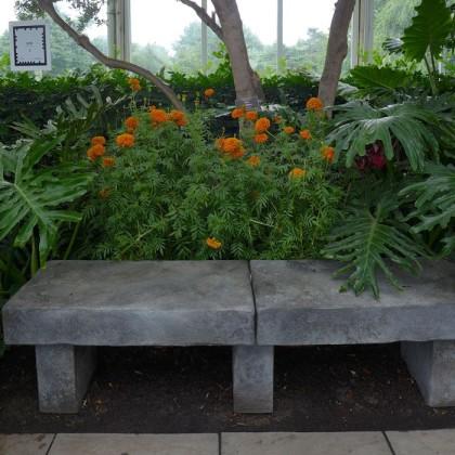 New York Botanical Garden marigolds