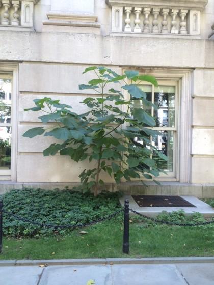 Tweed weed tree