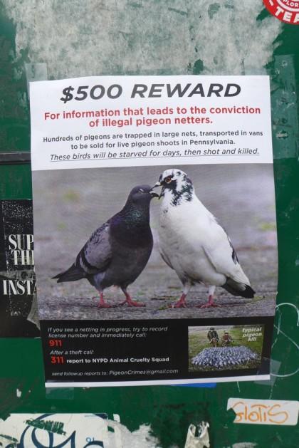 pigeon flyer