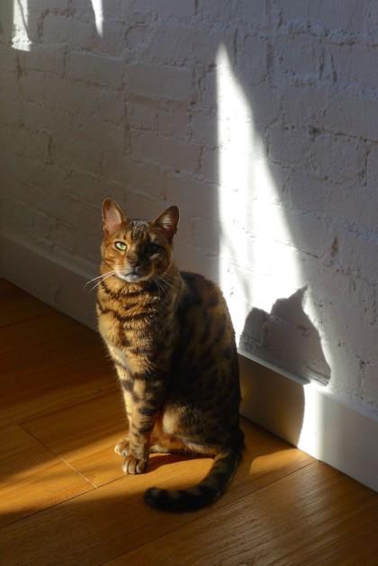 Loft Tour Laight penthouse cat