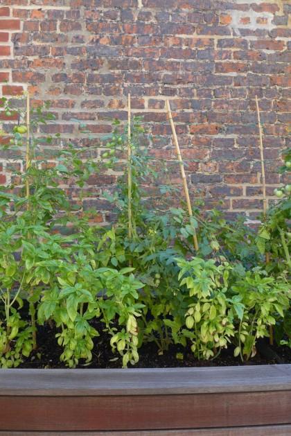 Loft Tour Laight penthouse roof deck tomato plants