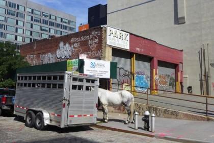 horse on Desbrosses