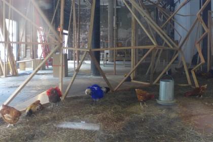 Performa chickens 101 Leonard