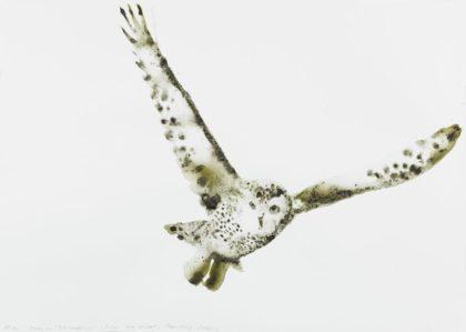 Snowy_Owl by Alexis Rockman