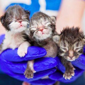kittens courtesy Best Friends