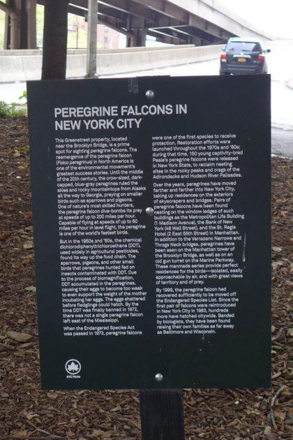 greenstreets-peregrine-falcon-sign-under-the-brooklyn-bridge