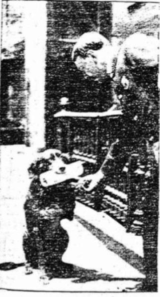 Strike police dog by New York Daily Tribune