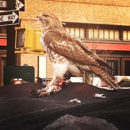 Hawk by J.